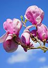 子宮肌瘤能喝豆漿嗎 吃哪些食物對子宮肌瘤好嗎
