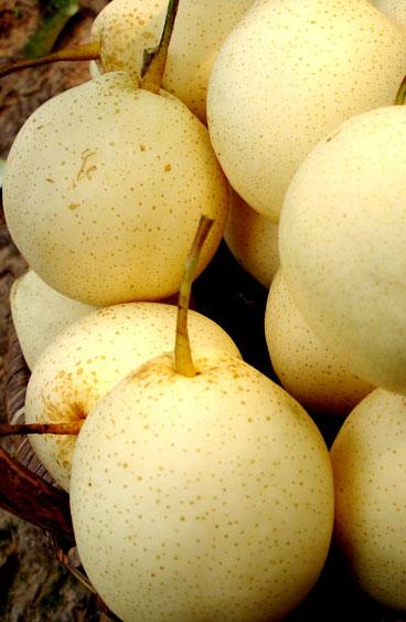 婴儿气管炎吃什么水果 还可以通过什么食物护理