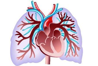 慢性支气管炎病理是什么