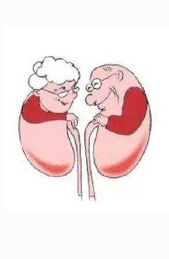 引起肾功能不全的因素有哪些