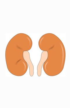 肾功能不全的原因是什么